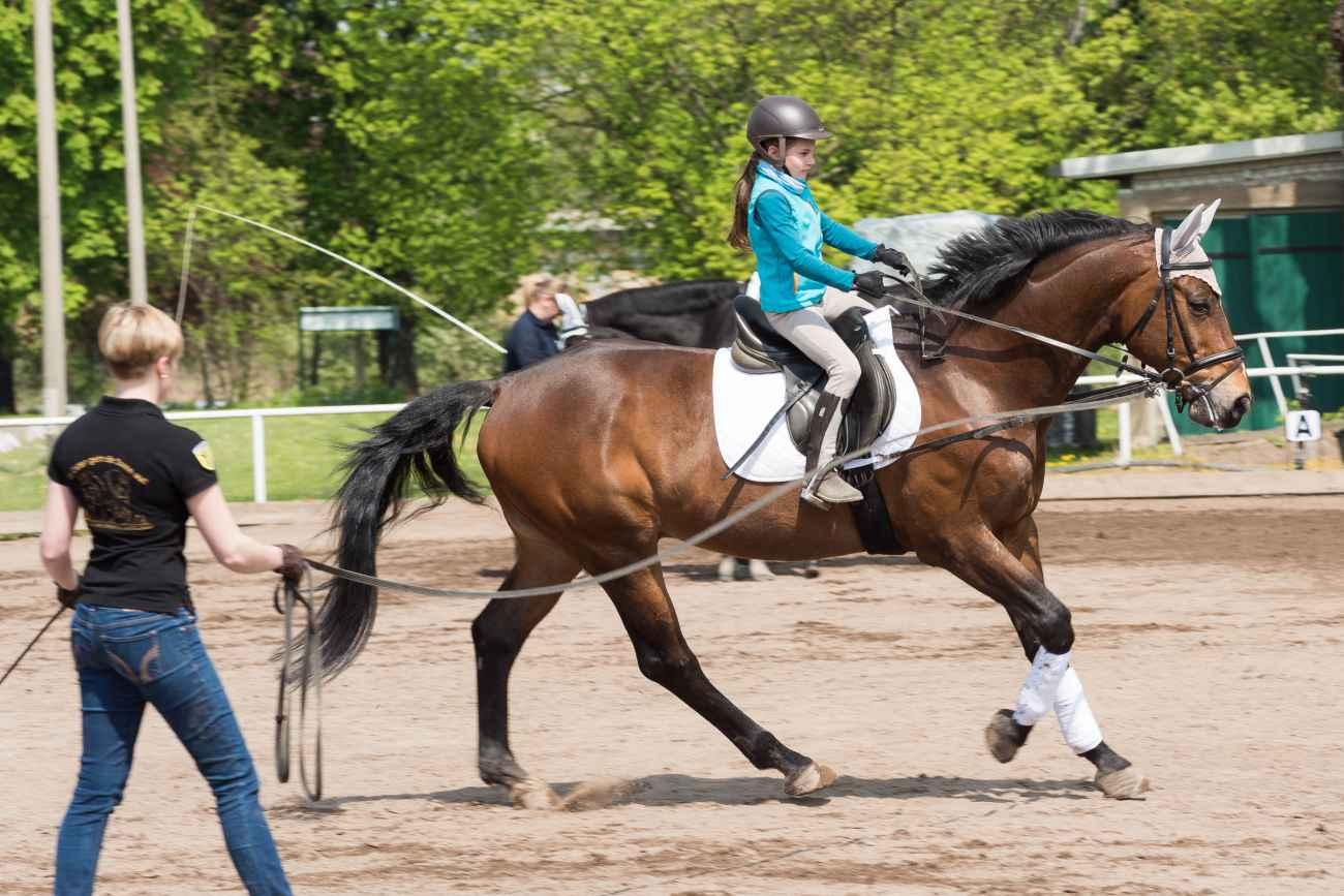 044_Herodot-Reitertag-Mai-2016_NFX9165