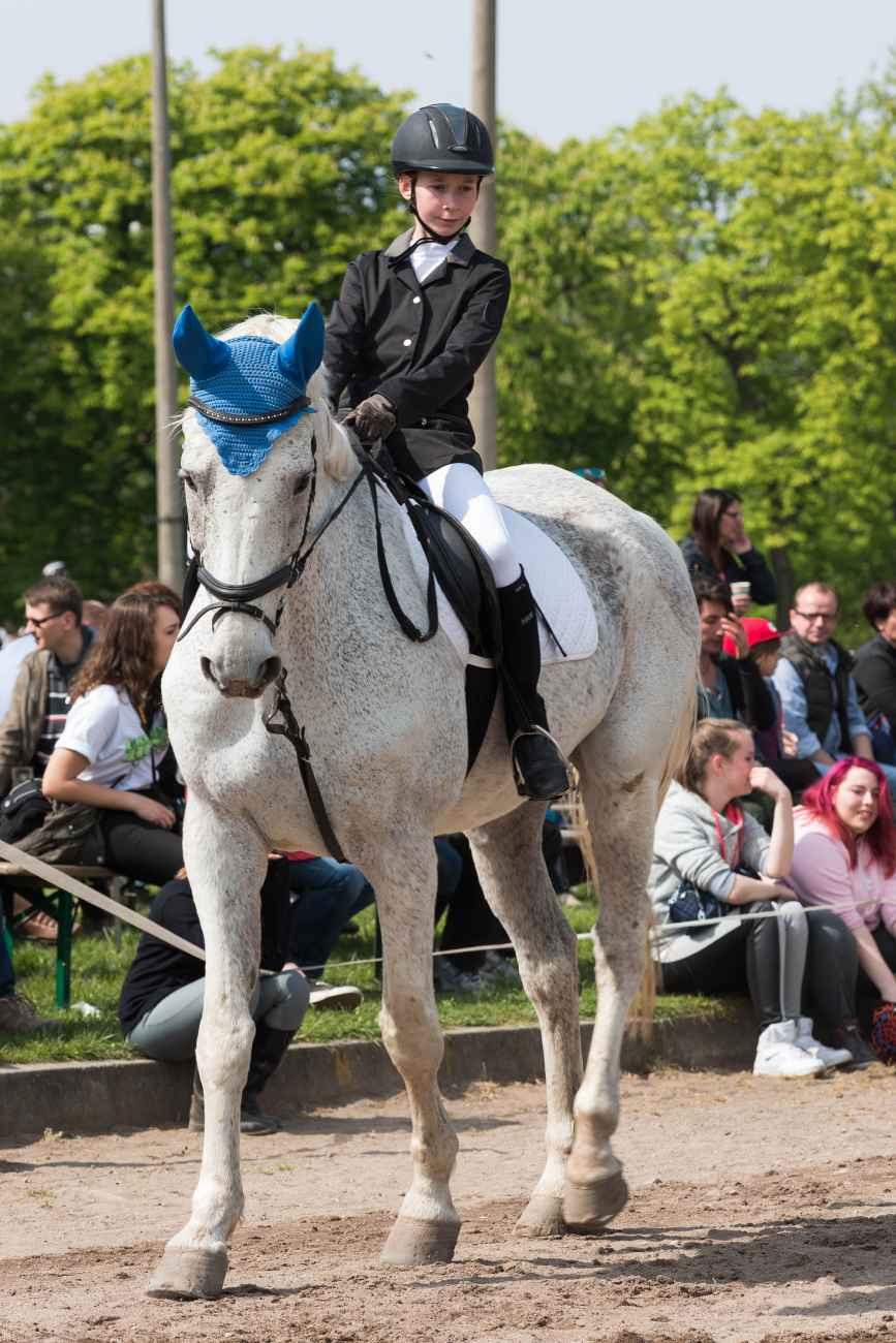 087_Herodot-Reitertag-Mai-2016_NFX9472